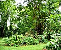 Botanic garden limbe20.jpg