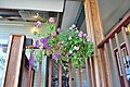 Bothell, WA - Country Village 41 - flowers hanging at Courtyard Hall.jpg