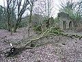 Bottom Moor (Fallen Tree and Derelict Building) - geograph.org.uk - 309954.jpg