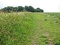 Boudica's Way south of Saxlingham Nethergate - geograph.org.uk - 1384408.jpg