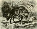 Brehms aardwolf.png