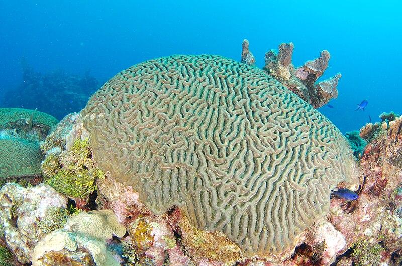 Briann coral2