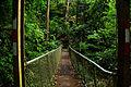 Bridge in the Rainforest.jpg