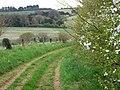 Bridleway near Whitsbury - geograph.org.uk - 1252351.jpg