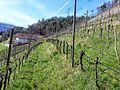 Brixen, Province of Bolzano - South Tyrol, Italy - panoramio (26).jpg