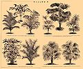 Brockhaus and Efron Encyclopedic Dictionary b44 658-2.jpg