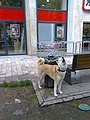 Bucuresti, Romania. Un caine frumos (din rasa Hachiko -Akita Inu), astepetandu-si stapanul sa iasa din magazin. Saracutul nu mai are rabdare.jpg