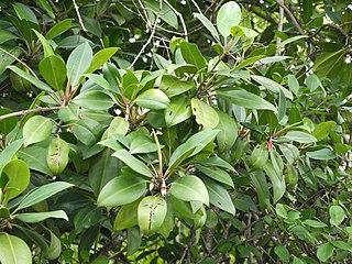Mangrove deforestation in Myanmar