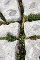 Burren (Sitomon).jpg