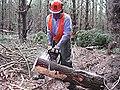 CSIRO ScienceImage 1546 Radiata Pine Field Trial.jpg