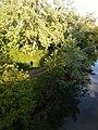 Canal de Huningue reliant Huningue à Niffer 5 (Petite Camargue Alsacienne).jpg