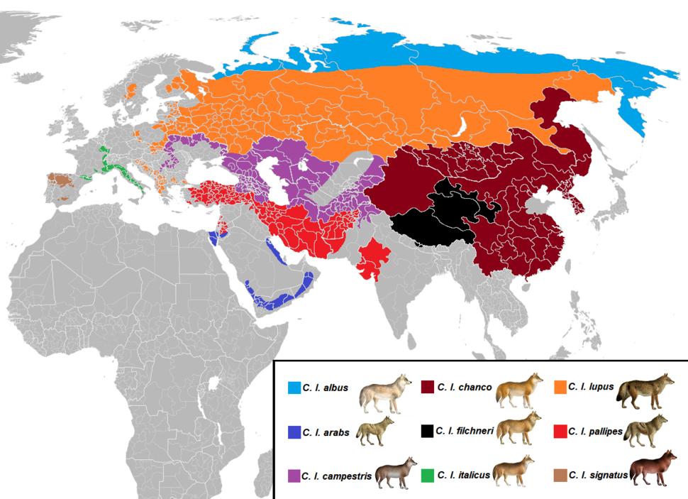 Canis lupus subspecies range Eurasia