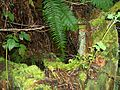Carkeek-Park-Old-tree-stump-3364.jpg