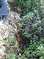 Cascada entre la maleza - panoramio.jpg