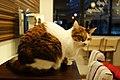 Cats (8258631854).jpg