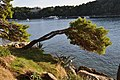 Cavtat - panoramio (2).jpg