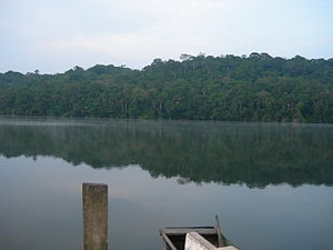 Chalalan Lake, Madidi National Park, Bolivia.jpg