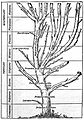 Charts; tree, plants and animal stem. Wellcome M0001296.jpg