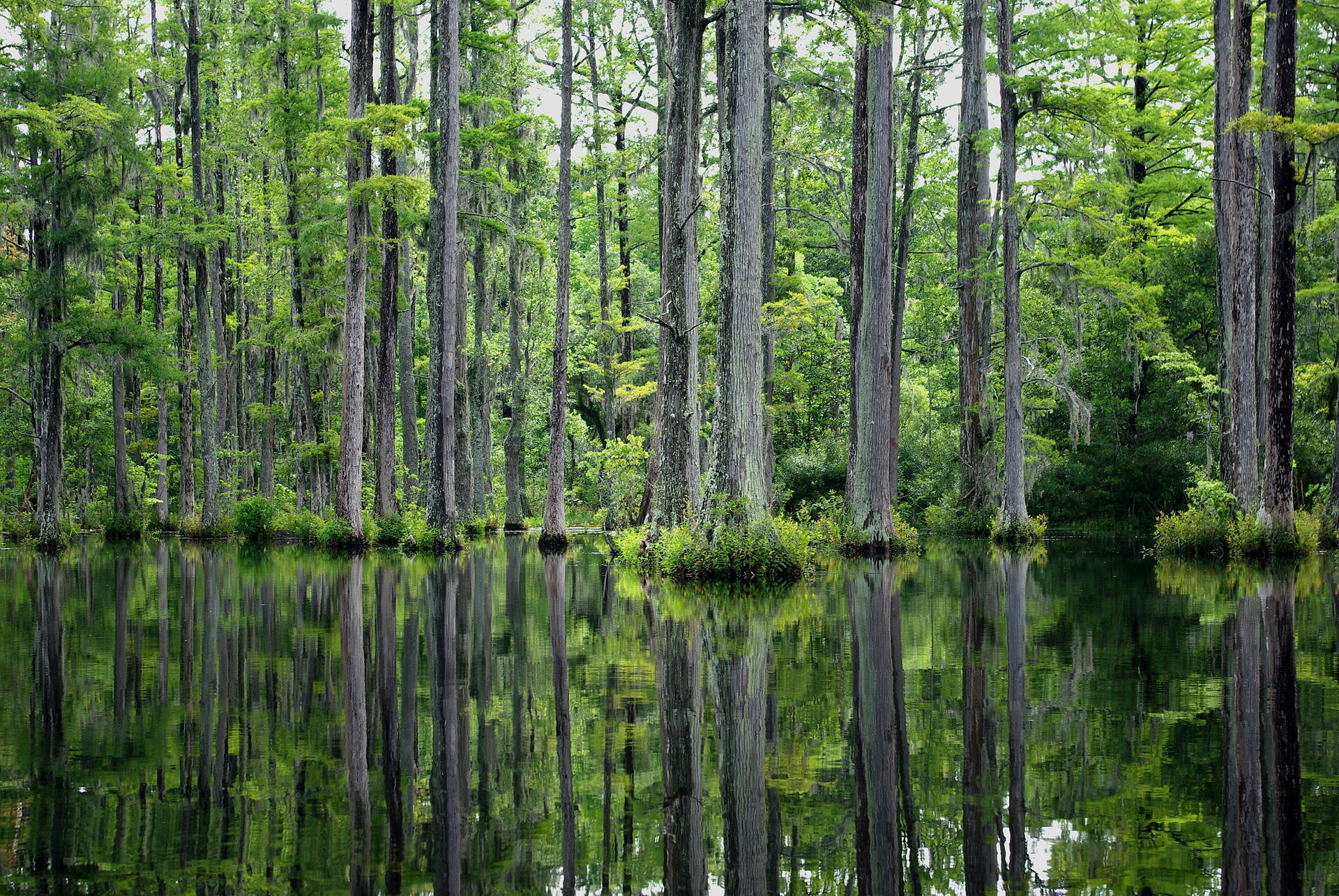 cypress gardens south carolina wikipedia