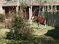 Chester Zoo (8883702038).jpg