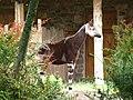 Chester Zoo (9487405378).jpg