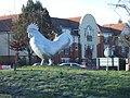 Chicken, Revealed - geograph.org.uk - 331000.jpg