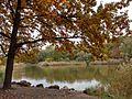 Chisinau dendrarium - autumn, golden leafs and lake.jpg