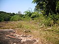 Chulannur Peafowl Sanctuary - panoramio (4).jpg