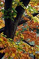"Cincinnati – Spring Grove Cemetery & Arboretum ""Autumn Entanglement 2"" (15083071994).jpg"