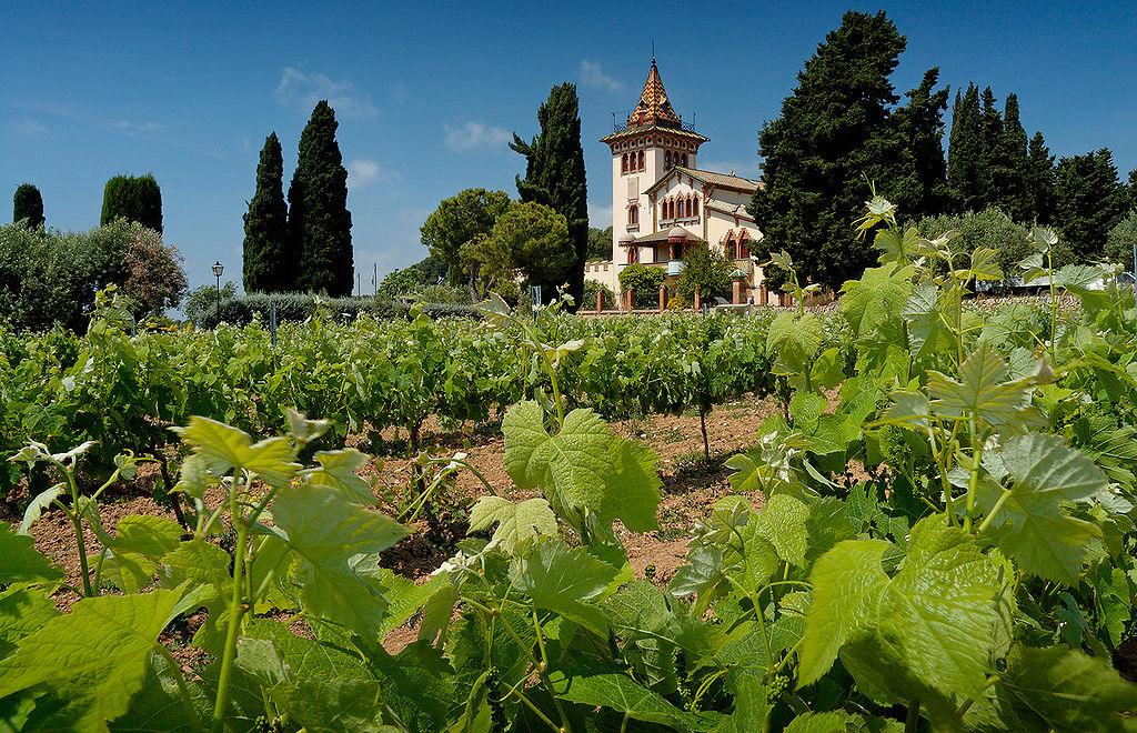 Tempranillo - červený víno Rioja