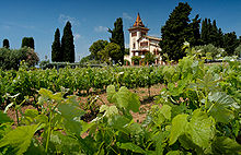 """Old World"" vineyard using modern spacing and trellising methods"