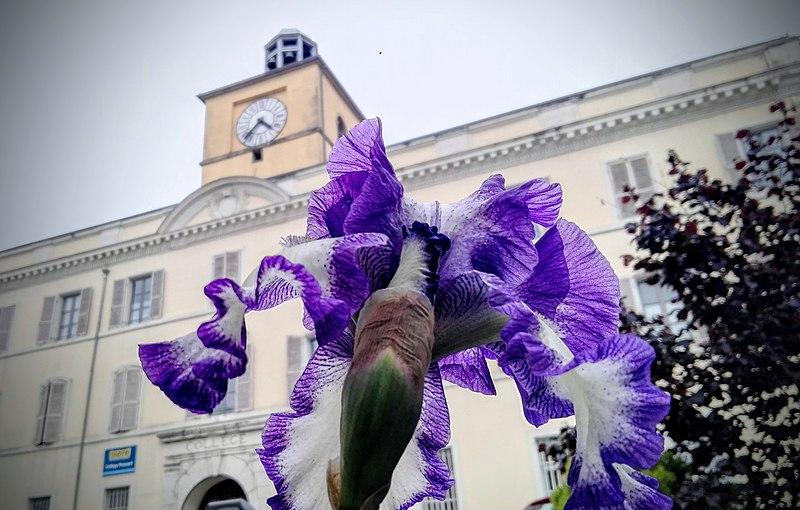 File:Collège Ponsard +iris.jpg