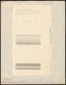 Coluber melanurus - schubben - 1700-1880 - Print - Iconographia Zoologica - Special Collections University of Amsterdam - UBA01 IZ12100227.tif