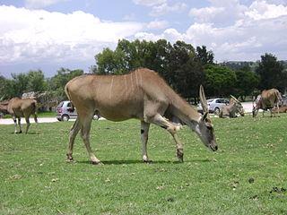 Africam Safari zoo in Puebla, Mexico