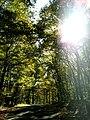 Conemaugh Gap Early Fall 2016 - panoramio - Ron Shawley (28).jpg