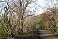 Coppiced hazel, Lindridge Hill - geograph.org.uk - 1624979.jpg