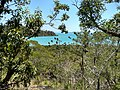 Coral Beach Walking Track, Conway National Park.jpg