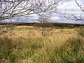 Cornavarrow Townland - geograph.org.uk - 1252686.jpg