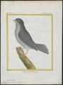 Cotinga pompadora - 1700-1880 - Print - Iconographia Zoologica - Special Collections University of Amsterdam - UBA01 IZ16600105.tif