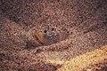 Crab,Trico Beach.jpg