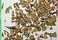 Crataegi folium cum flore by Danny S. - 001.jpg