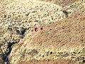 Crossing Nant Coli, Cwm Doethie Fawr, Ceredigion - geograph.org.uk - 1244463.jpg