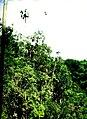 Cuba - Camagüey, Sierra de Cubitas (2006) (20776380276).jpg