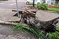 Cyclone Marcus in Darwin – Uprooted tree through concrete 03.jpg