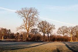 Dülmen, Dernekamp, Bäume -- 2021 -- 4582.jpg