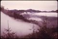 DISTANT VIEW OF OLYMPIC NATIONAL TIMBERLAND, WASHINGTON NEAR OLYMPIC NATIONAL PARK - NARA - 555132.tif