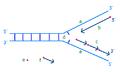 DNA-Okazaki-Fragment-prelim.PNG