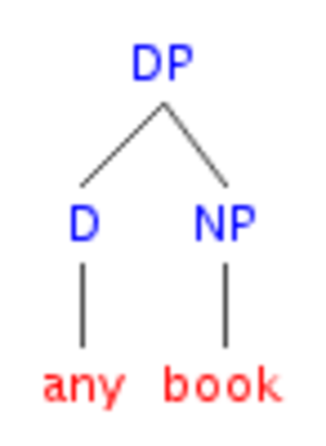 Head-directionality parameter - English DP structure