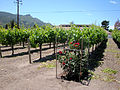 DSC28046, Chateau Julien Winery, Carmel, California, USA (5916653775).jpg
