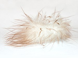 Fluffy down feather on white background